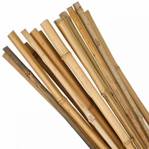 Bamboo Canes 2.4Mt - (Pack of 10)